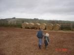 Occombe Farm